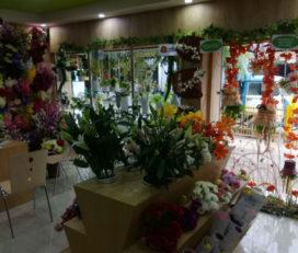 Ferns N Petals : Flower Shop